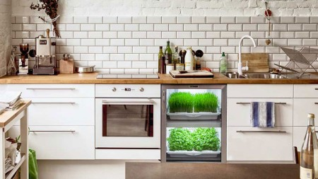 Photo gracieuseté de Urban Cultivator